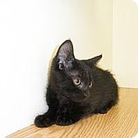 Adopt A Pet :: Myana - Milwaukee, WI
