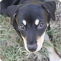 Adopt A Pet :: Gia - Arlington, TX