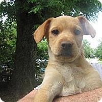 Adopt A Pet :: Tootsie - Humboldt, TN