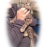 Adopt A Pet :: Snookums - Olmsted Falls, OH