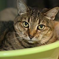 Adopt A Pet :: Cornflakes - Canoga Park, CA