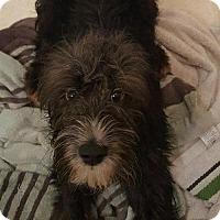 Adopt A Pet :: Dawson- ADOPTION PENDING - CONGRATS ALTHER FAMILY! - Dayton, MD