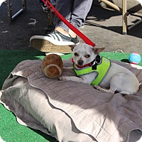 Adopt A Pet :: Newt - Yuba City, CA
