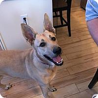 Adopt A Pet :: Lularoe - St Louis, MO