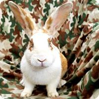 Adopt A Pet :: Big Max - Livermore, CA