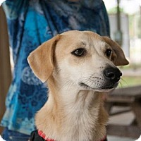 Adopt A Pet :: Daisy Loves Children - Rowayton, CT