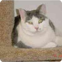 Adopt A Pet :: Judy - Pasadena, CA