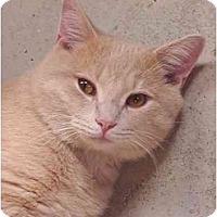 Adopt A Pet :: Gavin & Lily - Chesapeake, VA