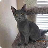 Adopt A Pet :: Little Foot - Scottsdale, AZ