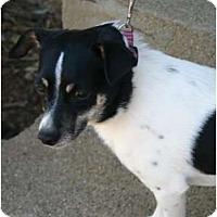 Adopt A Pet :: Luke - Carmel, IN