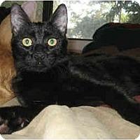 Adopt A Pet :: Humphrey - Davis, CA