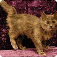 Adopt A Pet :: Darlilng - Sacramento, CA