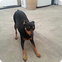 Adopt A Pet :: Gina - Oceanside, CA