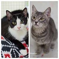Adopt A Pet :: Magellan - Merrifield, VA