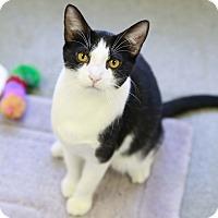 Adopt A Pet :: Tortilla - Kettering, OH