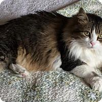 Adopt A Pet :: Nina - Lexington, KY