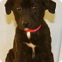 Adopt A Pet :: Private - Waldorf, MD