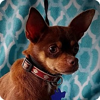 Adopt A Pet :: Rafiki - Allentown, PA