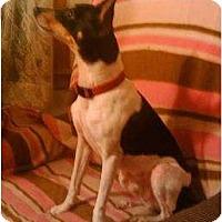 Adopt A Pet :: Dakarai - Carmel, IN