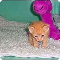 Adopt A Pet :: Bindi - Secaucus, NJ