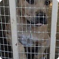 Adopt A Pet :: Champion - pasadena, CA