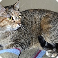 Adopt A Pet :: Lexi & Lacey - Xenia, OH