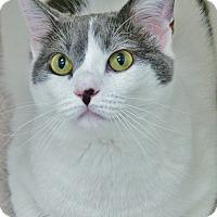 Adopt A Pet :: Savannah - Chambersburg, PA