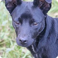 Adopt A Pet :: BEAR - cupertino, CA