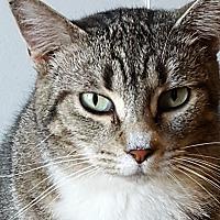 Adopt A Pet :: Tina - Rockford, IL