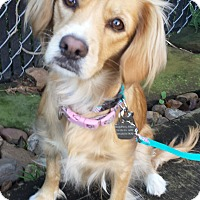 Adopt A Pet :: Star - Sugarland, TX