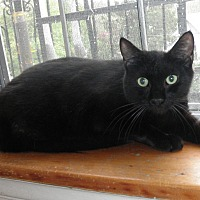 Adopt A Pet :: BLACKIE EVANS - Highland Park, NJ