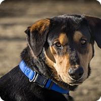 Adopt A Pet :: Hooch - Gardnerville, NV