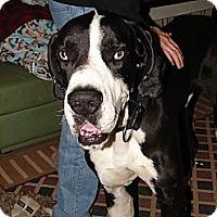 Adopt A Pet :: Moose - Phoenix, AZ