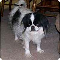 Adopt A Pet :: CHIPPER - Georgetown, KY