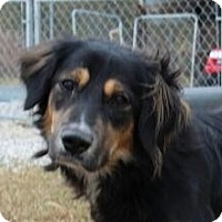 Adopt A Pet :: Trey - Brattleboro, VT