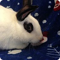 Adopt A Pet :: Milo - Williston, FL