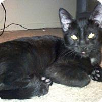 Adopt A Pet :: Jadeite - North Highlands, CA