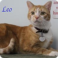 Adopt A Pet :: Leo - Bradenton, FL