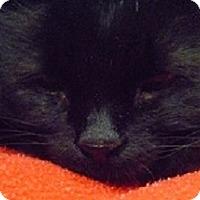 Adopt A Pet :: Selena - Hamburg, NY