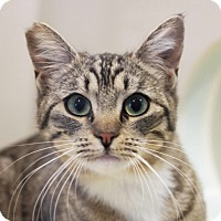 Adopt A Pet :: Amy - Redwood City, CA