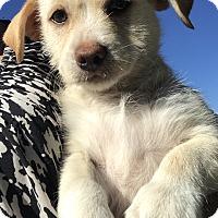 Adopt A Pet :: Kratos - Redding, CA