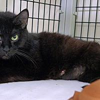 Adopt A Pet :: Chloe - Victor, NY