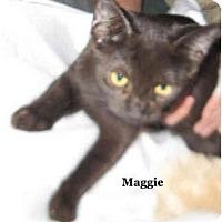 Adopt A Pet :: Maggie - Catasauqua, PA