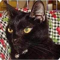 Adopt A Pet :: Boo Boo Bear - Chesapeake, VA
