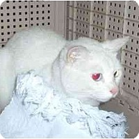 Adopt A Pet :: Kristy - Nashville, TN