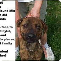 Adopt A Pet :: # 166-10 - ADOPTED! - Zanesville, OH
