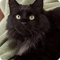 Adopt A Pet :: Prince Charming - Lancaster, MA