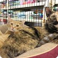 Adopt A Pet :: Carrie and Maury - Bear, DE