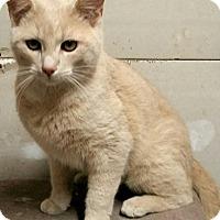 Adopt A Pet :: Dom - McDonough, GA