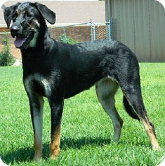 Labrador Retriever Mix Dog for adoption in Columbus, Nebraska - Mary